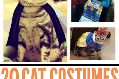 halloween-costumes-for-cats