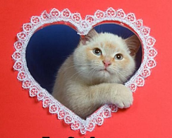 valentine's gifts for cat lovers