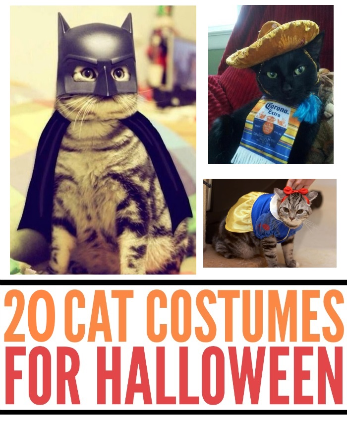 20 Halloween Costumes For Cats
